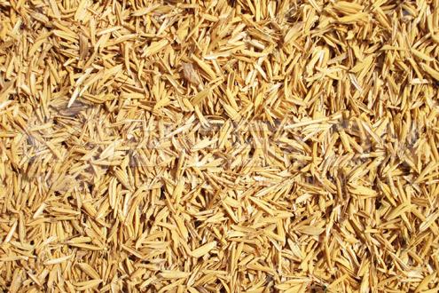 Rice Hull